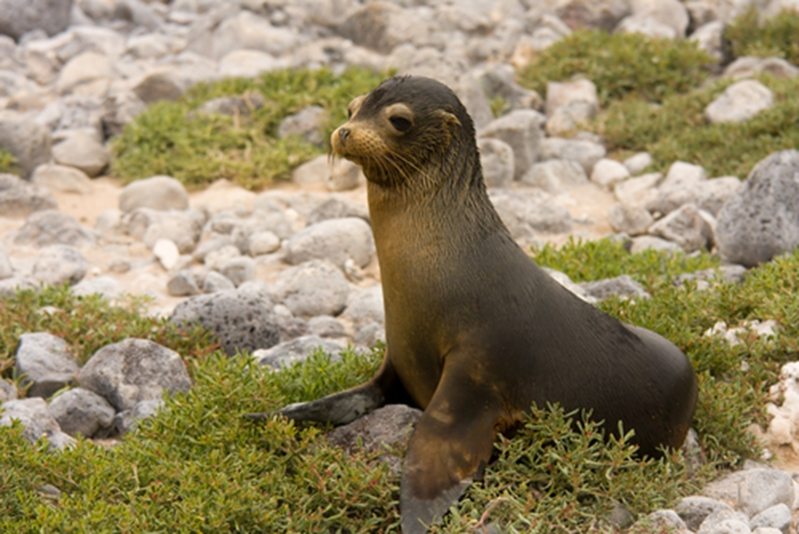 Sea lions and other delights await you in the Galapagos Islands.