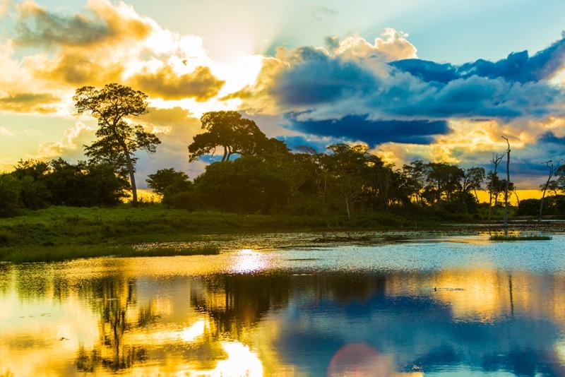 Explore the Amazon when in Brazil.