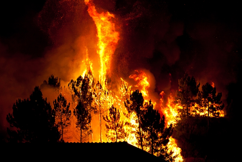 Are you insured against bushfire damage?