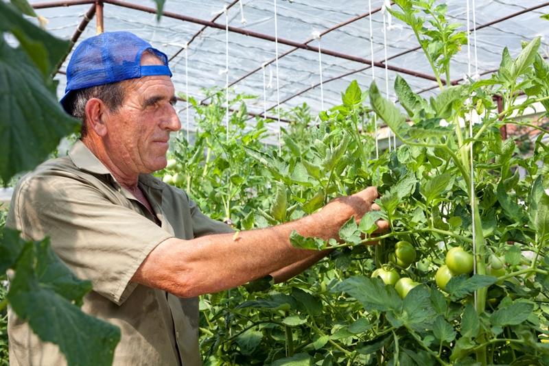 Your greenhouse agriculture clients need tailored insurance