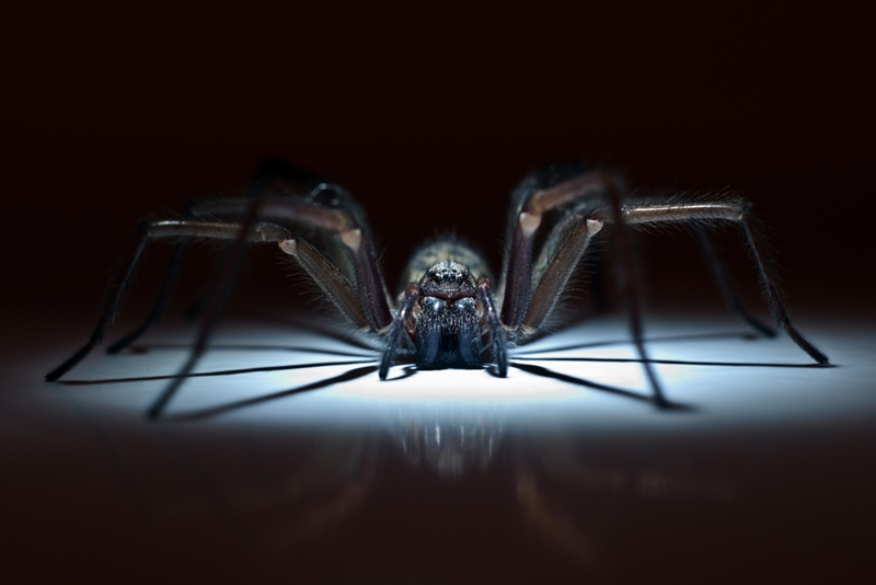 An encounter with the wrong type of spider could put workers at risk.