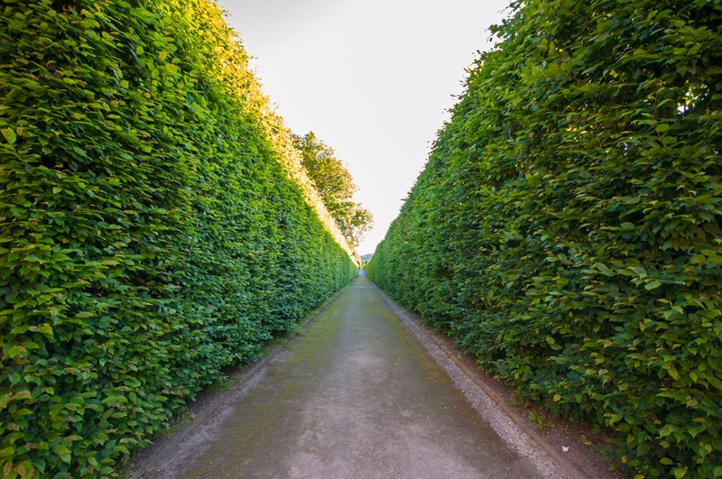 Do you love a straight hedge, or an unruly one?