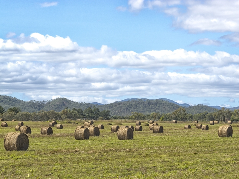 Hay is particularly susceptible to high or low moisture levels.