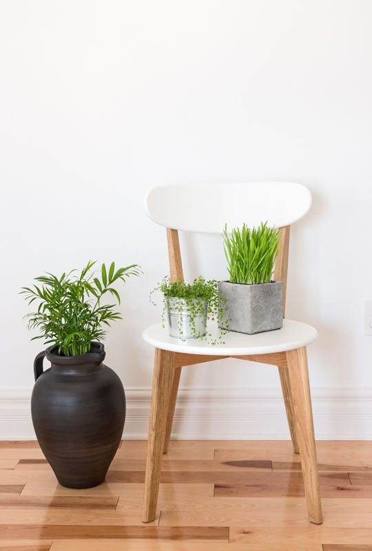 Plants can help bring character to an otherwise plain space.