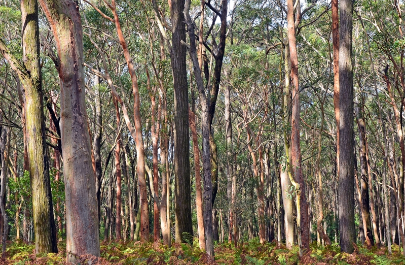 Sustainable timber production is the only option for Australia.