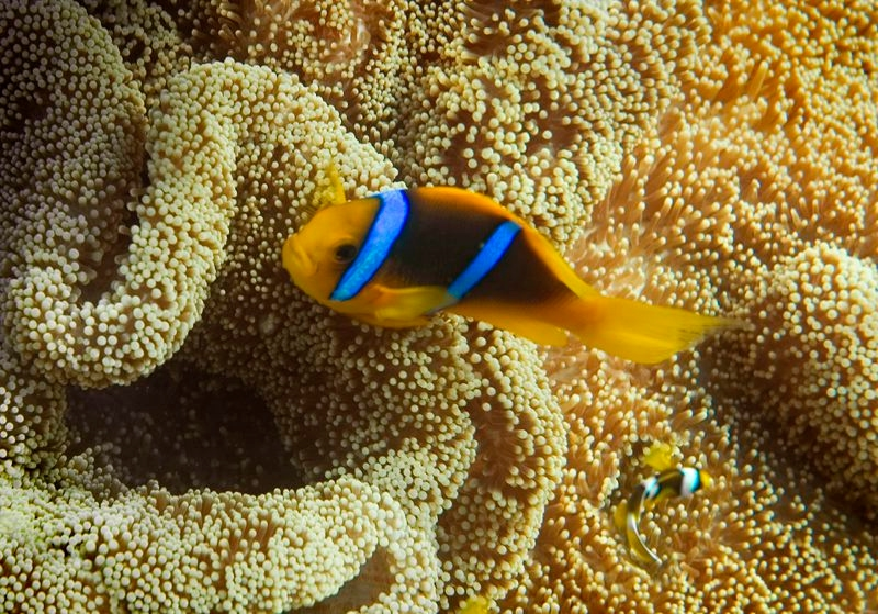 Try and spot Nemo while snorkeling!