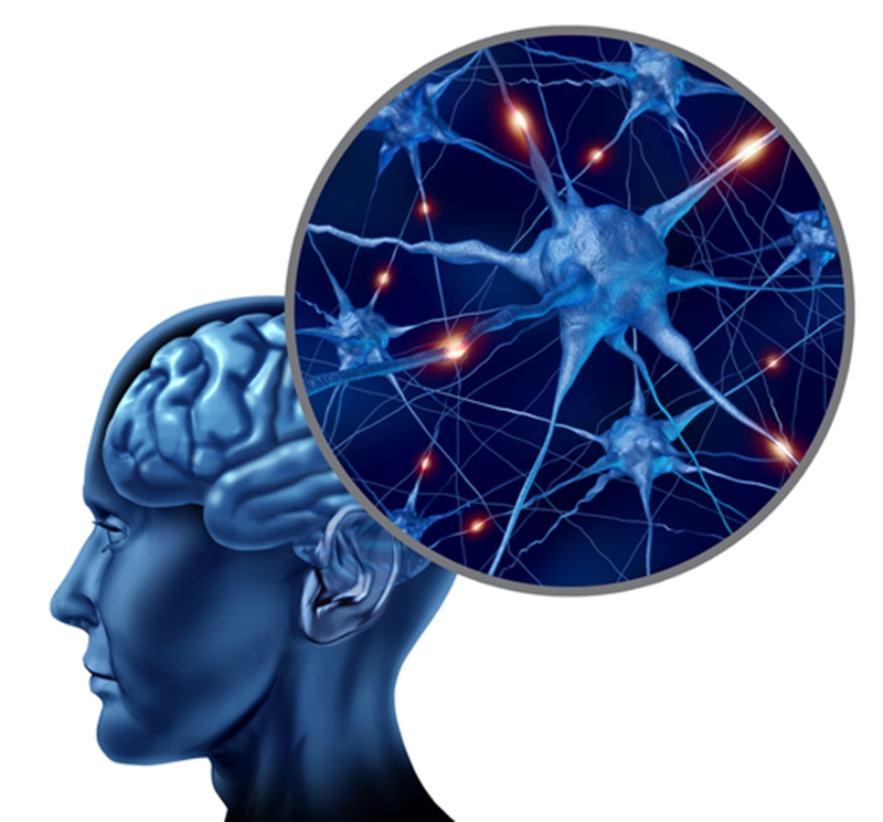 Better memory and overall brain activity is improved with regular fitness.