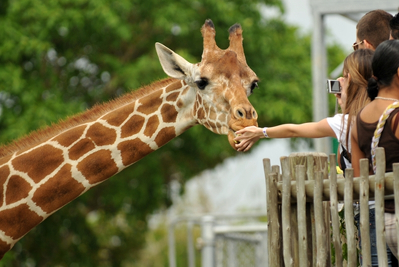 Animal-lovers will enjoy every moment at Taronga Zoo, easily accessible from the Macleay Hotel.