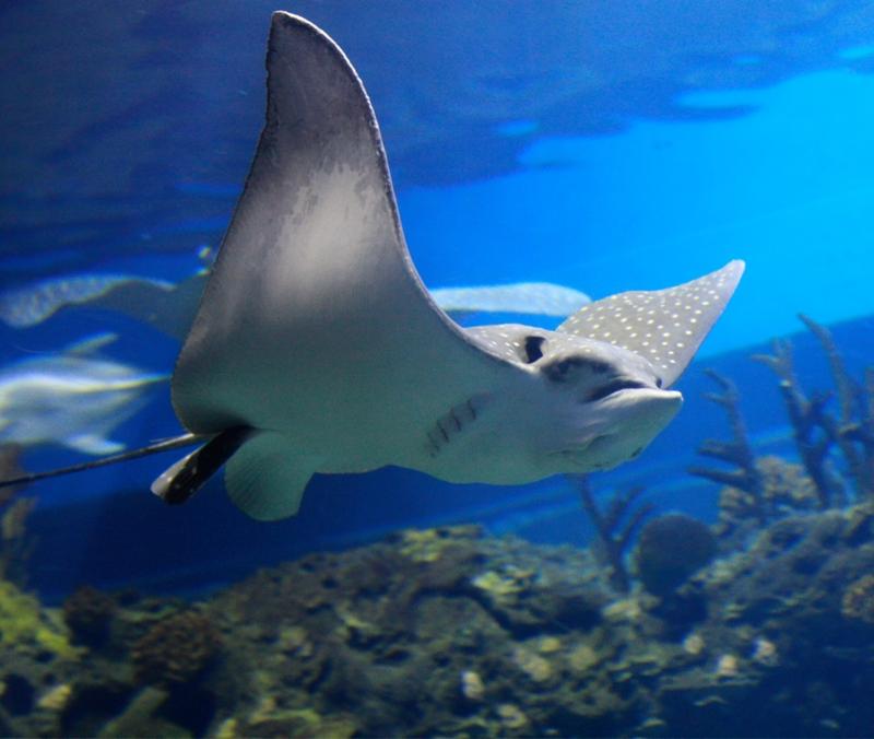 Encounter strange and wonderful wildlife on Ningaloo Reef.