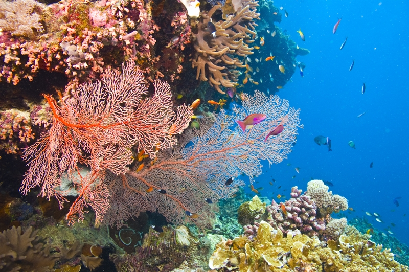 Colourful coral reefs in Fiji.