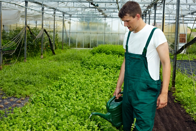 Greenhouses could offer a way for farmers to reduce overall water consumption.
