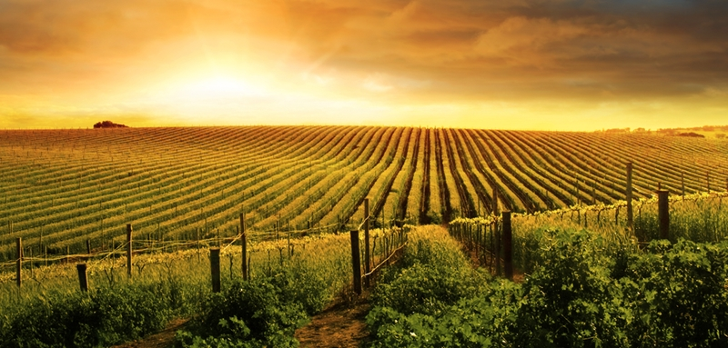Growers are starting to sell their wines for better prices.