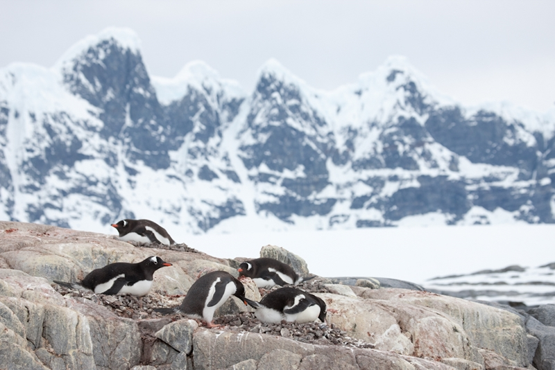 You'll see a variety of Antarctica's wildlife on your voyage.