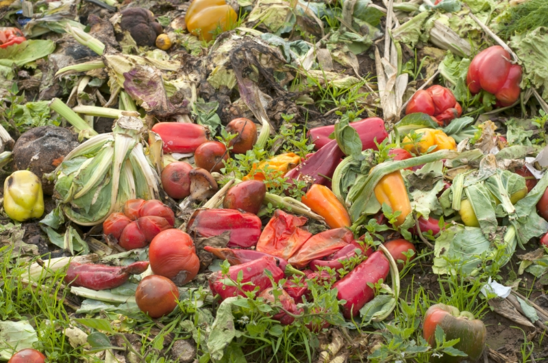 Food waste may now be repurposed and used in the creation of pharmaceutical products.