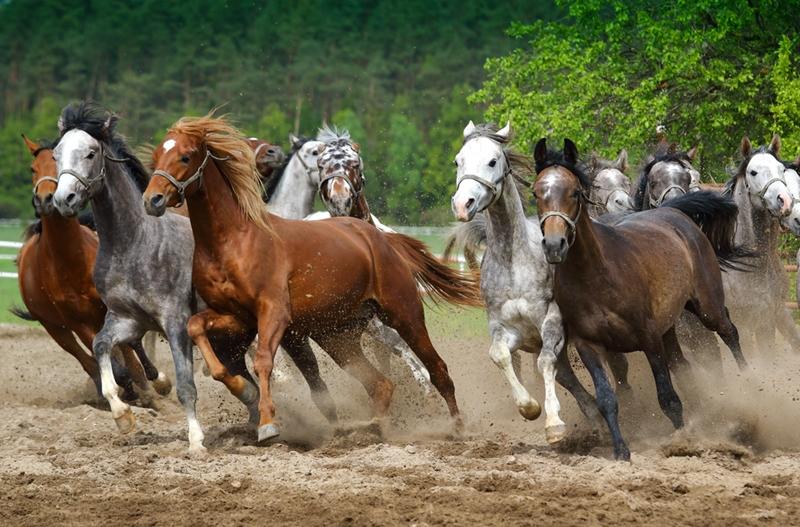 Horseback Riding Finance