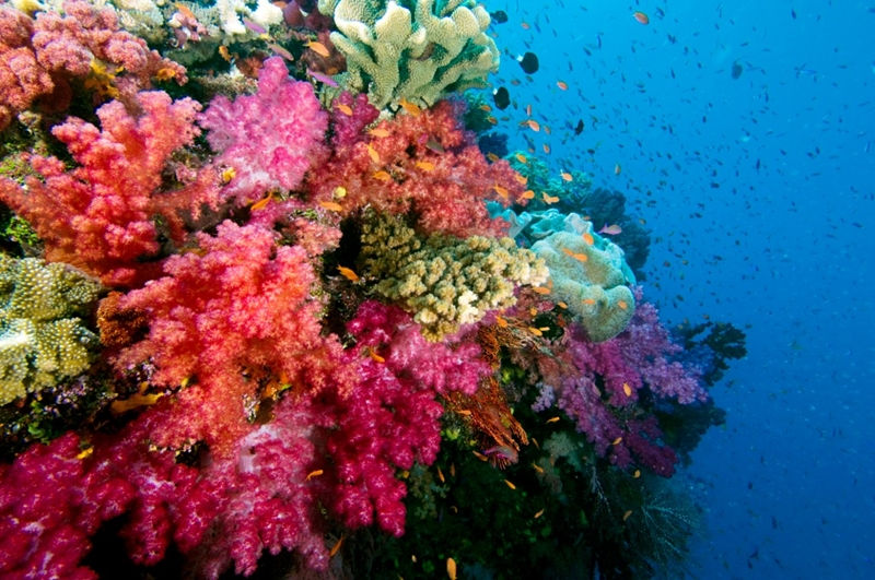 Explore the soft coral capital of the world on a scuba diving excursion.