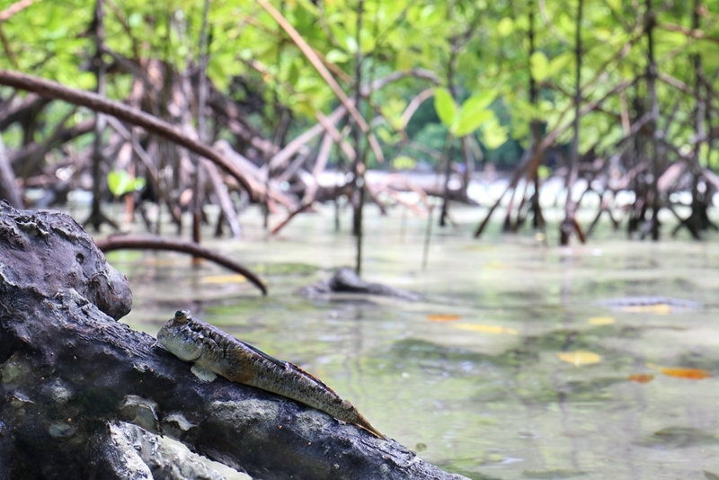 Explore the mangrove forests.