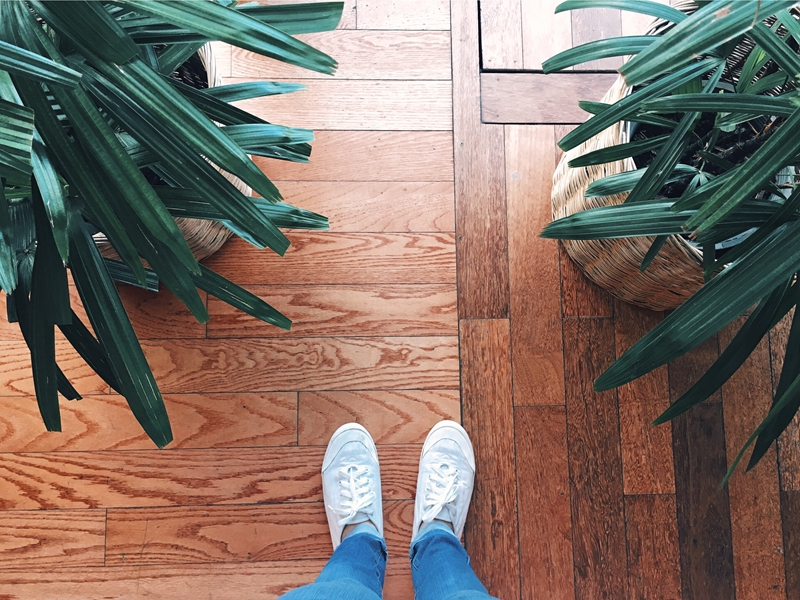 Indoor greenery is making a comeback.