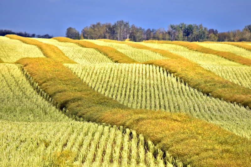 Crop insurance brokers have an important role to play sharing best-practices between farmers.