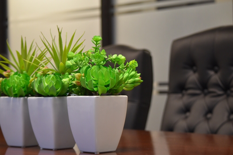 Humans need plants, it's science. Here's why you need some in your office.