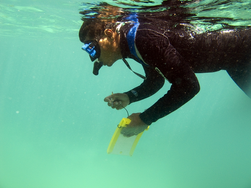 What marine life will you encounter while snorkelling in Fiji?