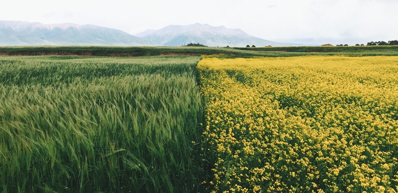 A farmer's choice of crop could impact their premiums.