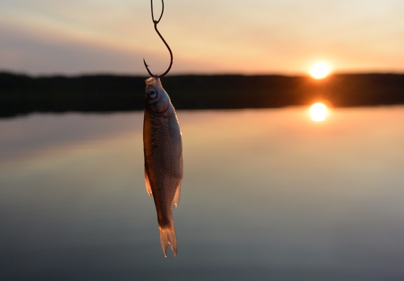 The kind of bait you use depends on the kind of fish you're trying to catch.