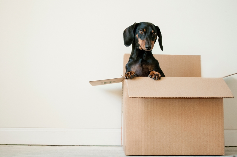 Review the pet policies of your new home to ensure a smooth transition for your furry friends.