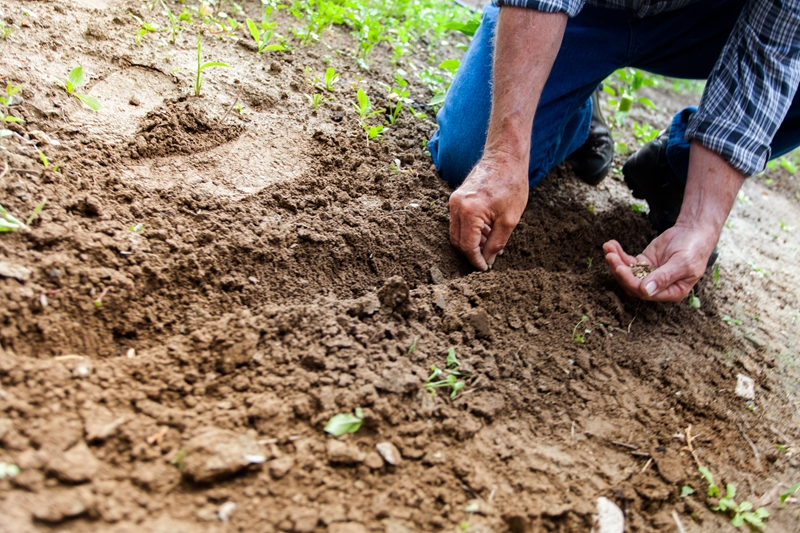 Soil erosion can be prevented with land management practices such as irrigation.