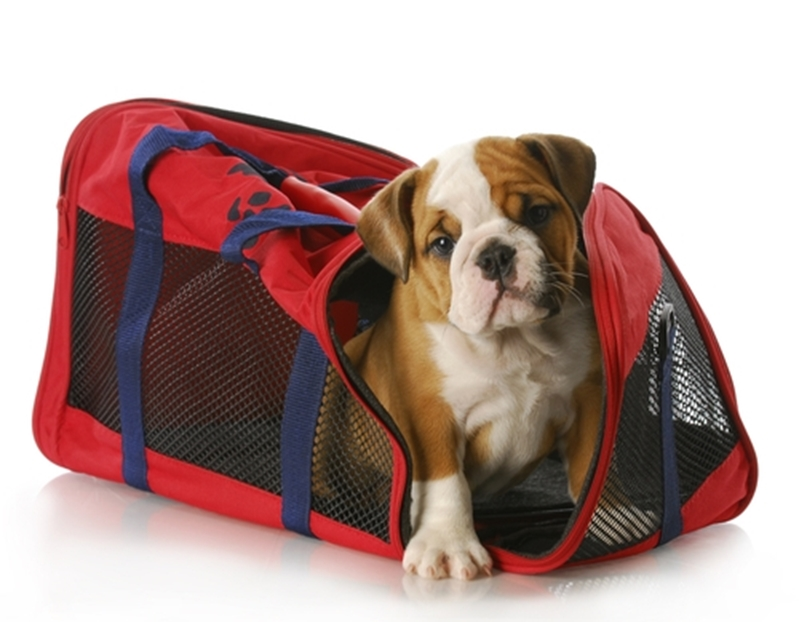 Get your pet comfortable with their carrier prior to travelling.